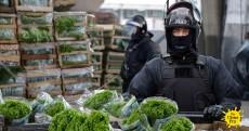 Lettuce-Raid